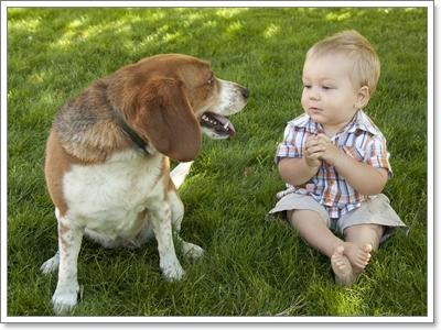 Dogilike.com :: ไขข้อสงสัย? ทำไมน้องหมาถึงพูดได้