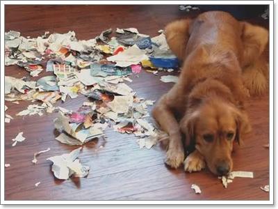 Dogilike.com :: 5 สิ่งที่คาดไม่ถึง เมื่อให้อาหารน้องหมาไม่ตรงเวลา