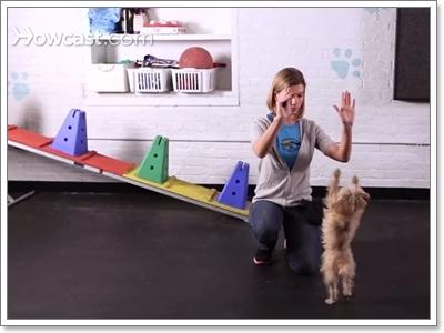 Dogilike.com :: 5 ความสามารถพิเศษ! อัพเกรดน้องหมาให้ไฮโซ
