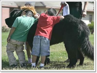 Dogilike.com :: 5 สิ่งที่คนมักเข้าใจผิด เกี่ยวกับน้องหมาใหญ่ไซส์จัมโบ้