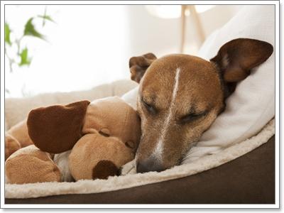 Dogilike.com :: น้องหมาไม่ติดเจ้าของ แสดงว่าไม่รักเจ้าของจริงหรือ?
