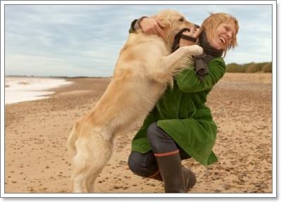 Dogilike.com :: เช็ก! 10  พฤติกรรมผู้เลี้ยงที่ฝึกน้องหมาอย่างไรก็ไม่สำเร็จ!