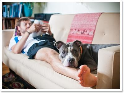 Dogilike.com :: 5 พฤติกรรมน้องหมาที่เจ้าของหนักใจมากที่สุดในปี 2015
