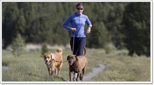 Dogilike.com :: รู้ก่อนแข่ง! เตรียมตัวให้น้องหมาท้า 4 ขาวิ่งมาราธอน