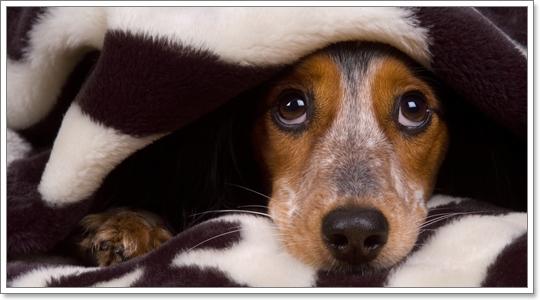 Dogilike.com :: 5 สุดยอดเทคนิค จัดการน้องหมากลัวพลุเสียงฟ้าร้องให้ได้ผล