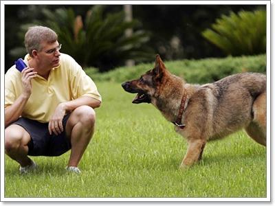 Dogilike.com :: เจาะเวลาหาอดีต! ยุคไหนฝึกน้องหมาโหดสุด