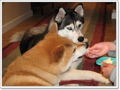 Dogilike.com :: ผู้เลี้ยงต้องรู้! ป้อนข้าวให้น้องหมา ทำให้เกิดปัญหาอะไรได้บ้าง
