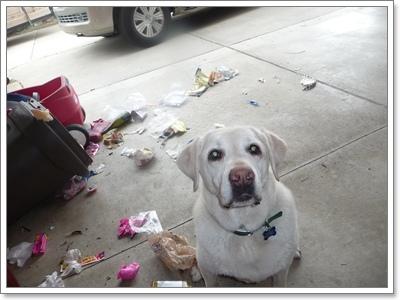 Dogilike.com :: ระวัง! 5 นิสัยสุดแย่ของน้องหมา ที่เกิดขึ้นได้ถ้าถูกสปอยล์
