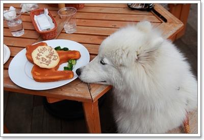 Dogilike.com :: เจาะลึกวิธีการเลี้ยงของเหล่าเจ้าตูบสายพันธุ์ไฮโซ!
