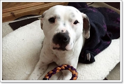 Dogilike.com :: รอดปาฏิหาริย์! พบสุนัขถูกลูกดอกปักกลางศีรษะ เดินหลงทางในป่า