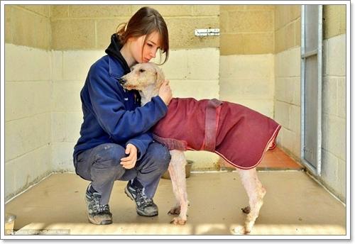 Dogilike.com :: จำแทบไม่ได้! ความเปลี่ยนแปลงสุดทึ่งของสุนัขขนสังกะตังถูกทิ้ง