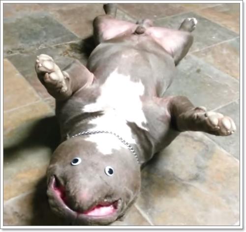 Dogilike.com :: คลิปสุดฮา! เมื่อเจ้าของเจอสัตว์แปลกสายพันธุ์ใหม่ในห้องนั่งเล่น