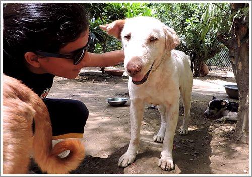 Dogilike.com :: 2 เดือนปาฏิหาริย์! จากสุนัขขี้เรื้อนข้างถนนถูกช่วยเหลือจนมีชีวิตใหม่ (มีคลิป)