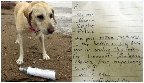 Dogilike.com :: ฮือฮา! เจ้าตูบพบจดหมายในขวดแก้วลอยทะเลไกลกว่า 3,500 ไมล์