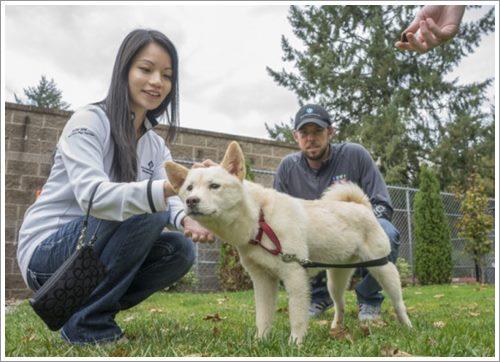 Dogilike.com :: รอดหวิด! คู่รักแคนาดารับเลี้ยงเจ้าตูบจากฟาร์มเนื้อสุนัขในเกาหลีใต้