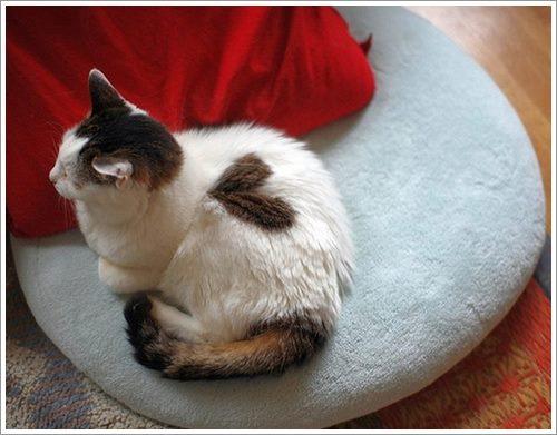 """Dogilike.com :: 18 ภาพเมื่อเหล่าสัตว์เลี้ยงมี """"หัวใจ"""" บนร่างกาย น่ารักแค่ไหนต้องดู !"""