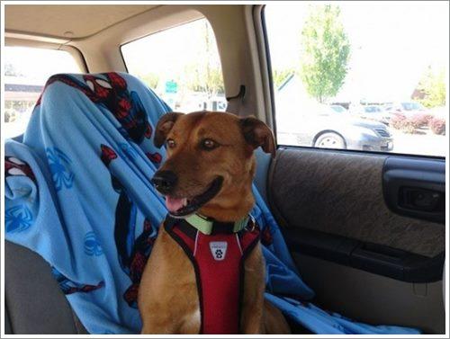 Dogilike.com :: 21 ภาพใบหน้าเปื้อนยิ้มเมื่อเจ้าตูบถูกรับเลี้ยง อบอุ่นแค่ไหนต้องดู!