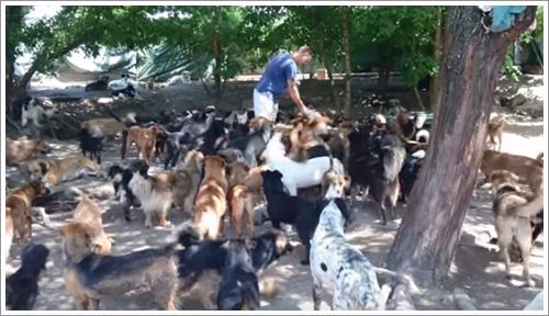 Dogilike.com :: เรื่องราวสุดซึ้ง! เมื่อชายใจดีช่วยชีวิตสุนัขจรจัด 450 ตัวในเซอร์เบีย