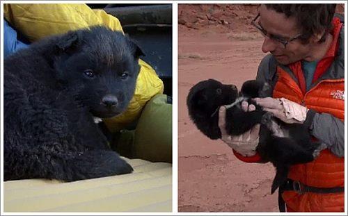 Dogilike.com :: รอดหวิด! 2 นักผจญภัยช่วยชีวิตลูกสุนัขถูกทิ้งกลางทะเลทราย