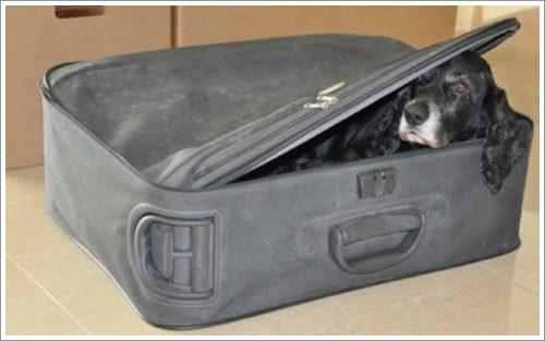 Dogilike.com :: คำขอสุดท้าย! สามีแอบพาสุนัขเข้า รพ. ให้ภรรยาเห็นหน้าก่อนตาย