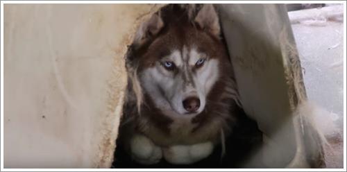 Dogilike.com :: สุดปลื้ม! ชาวมะกันต่อคิวขอรับเลี้ยงสุนัข 525 ตัวที่ถูกช่วยจากโรงงานผลิตลูกสุนัข
