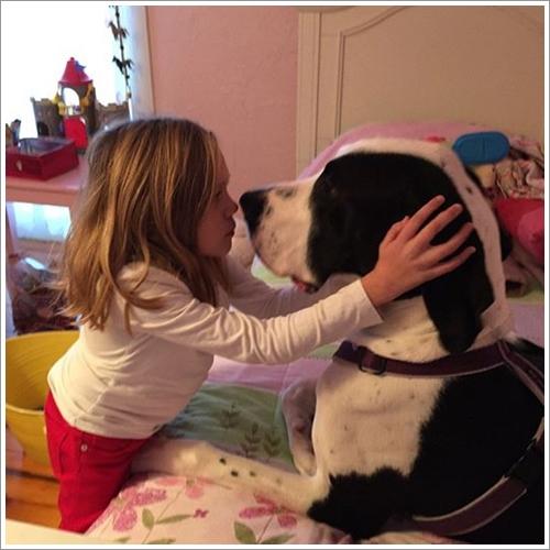 Dogilike.com :: ซึ้ง! เจ้า Goerge สุนัขผู้เป็นไม้เท้า ให้หนูน้อยพิการจับหลังหัดเดิน