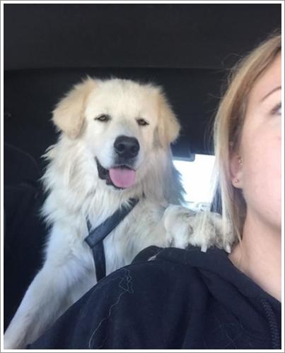 Dogilike.com :: เพื่อนแท้! เจ้าตูบนั่งเฝ้าศพเพื่อน ไม่ยอมห่างไปไหน