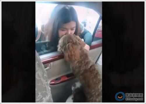 Dogilike.com :: ฝันร้ายคนรักสัตว์! เมื่อร้านตัดขนกลายเป็นสถานที่จบชีวิตสุนัขสุดรัก