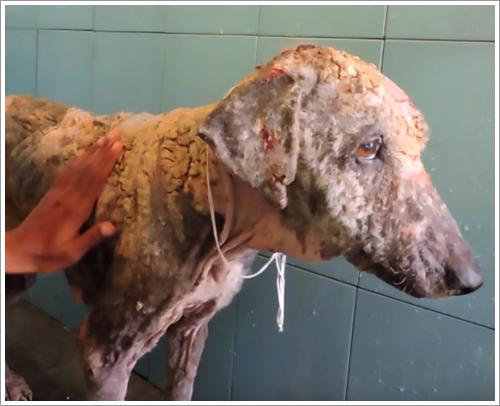 Dogilike.com :: ฟ้าหลังฝน! สุนัขขี้เรื้อนป่วยหนักมีชีวิตใหม่หลังคนใจดียื่นมือช่วยเหลือ