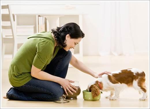 Dogilike.com :: 5 เทรนด์อาหารสำหรับน้องหมาที่มาแรงสุด ๆ ประจำปี 2015 !!
