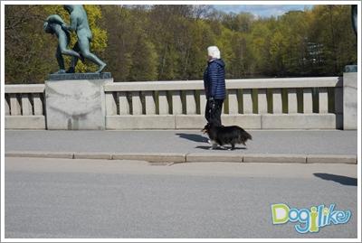 Dogilike.com :: รู้ยัง! เทรนด์เลี้ยงน้องหมา Back To The Basic กลับมาฮิตแล้วนะ