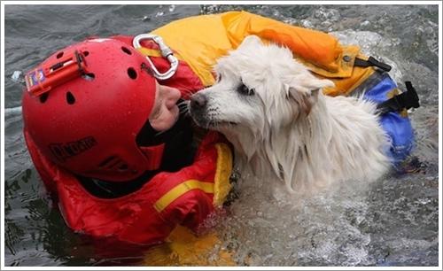 Dogilike.com :: รวมภาพซึ้ง! นักดับเพลิง กู้ภัย ฮีโรกับภารกิจช่วยชีวิตเหล่าสัตว์เลี้ยง