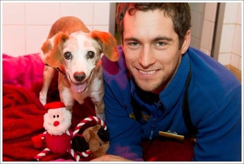 Dogilike.com :: รอดแล้ว! สุนัขอายุ 13 ปีถูกช่วยเหลือ หลังพบถูกทิ้งกลางป่าในอังกฤษ