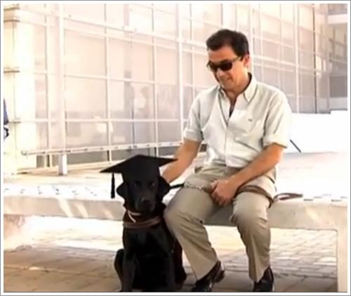 Dogilike.com :: สุดปลื้ม! เจ้าตูบนำทางได้รับเกียรติ รับปริญญาพร้อมเจ้าของในสเปน