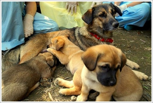 Dogilike.com :: รอดหวิด! พบแม่สุนัขและลูก 6 ตัว ถูกฝังทั้งเป็นในประเทศจีน
