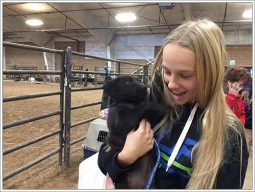 Dogilike.com :: ซึ้ง! คนรักสัตว์แห่ช่วยเหลือสุนัขกว่า 100 ตัว หลังเกิดอุบัติเหตุขณะขนย้ายขามรัฐฯ