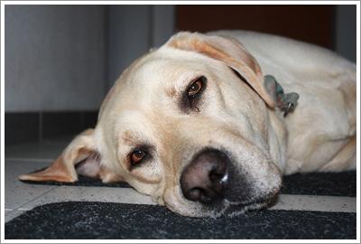 Dogilike.com :: น้องหมากินยาก เบื่ออาหาร ... ปัญหาสุดหนักใจกับวิธีจัดการที่ได้ผล !