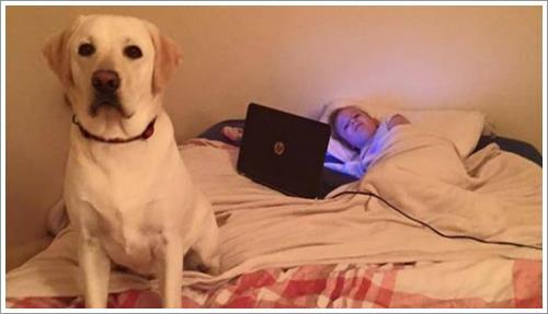 Dogilike.com :: ฮีโรผู้พิทักษ์! ลาบราดอร์เห่าเตือน ช่วยชีวิตสาวน้อยรอดพ้นจากความตาย