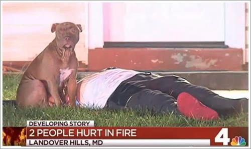 Dogilike.com :: ซื่อสัตย์! สุนัขไม่ยอมห่าง นั่งเฝ้าเจ้าของหลังบาดเจ็บจากเหตุเพลิงไหม้