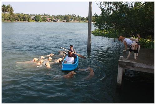 Dogilike.com :: คลิปน่ารัก! เมื่อคู่รักชาวไทยถ่ายพรีเวดดิ้ง โดยมีแก๊งโกลเด้นฯ สุดป่วนร่วมซีน