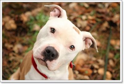 Dogilike.com :: 5 วิธีดูแลสุขภาพจิตใจเจ้าตูบให้แจ่มใสไปชั่วชีวิต