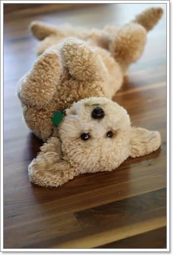 Dogilike.com :: 20 ภาพลูกสุนัขที่มีหน้าตาน่ารักคล้ายตุ๊กตาหมีแบบสุดๆ