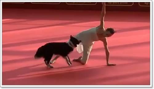 Dogilike.com :: ต้องดู! คลิปสุนัขแสนรู้กับความสามารถที่ทำให้คนทั้งโลกทึ่ง