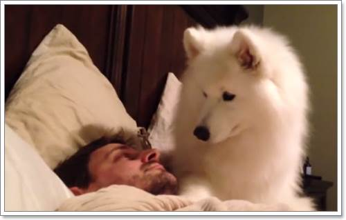 Dogilike.com :: เจ้าตูบตัวนี้จะทำอย่างไร? เมื่อเจ้าของไม่ยอมลุกขึ้นจากเตียง