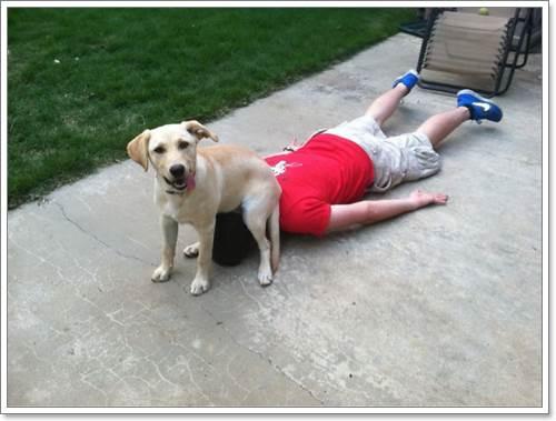 Dogilike.com :: 25 ภาพวีรกรรมสุดป่วนของเจ้าตูบที่ทำให้เจ้าของปวดตับ