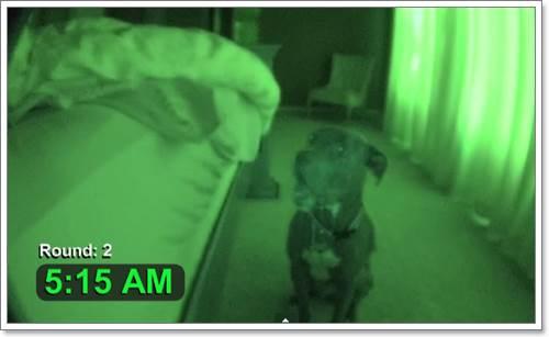 Dogilike.com :: ดูกันชัดๆ ! เมื่อเจ้าของตั้งกล้องแอบถ่ายพฤติกรรมสุนัขในช่วงเช้ามืด