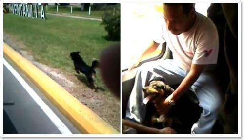 Dogilike.com :: ชาวเน็ตแห่แชร์! สุนัขซื่อสัตย์วิ่งตามรถบัสที่เจ้าของโดยสาร