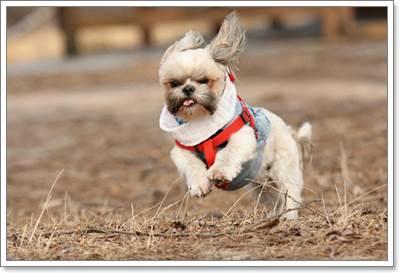 Dogilike.com :: 7 เคล็ดลับดูแลน้องหมาที่เป็นภูมิแพ้ทางผิวหนัง