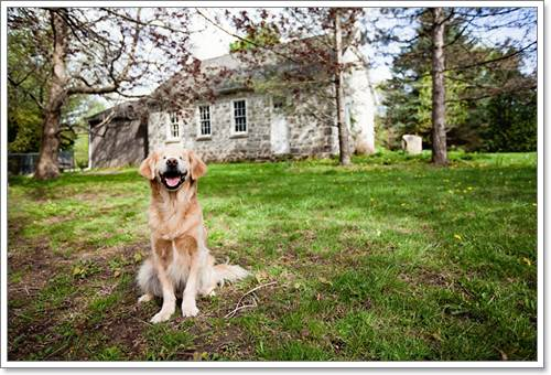 Dogilike.com :: Smiley อดีตสุนัขตาบอดจากโรงงานผลิตลูกสุนัขกับหน้าที่สุนัขบำบัดฮีโร
