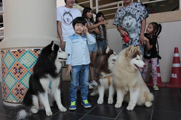 Dogilike.com :: บรรยากาศ Thailand International Dog Show & Pet Variety@เชียงใหม่